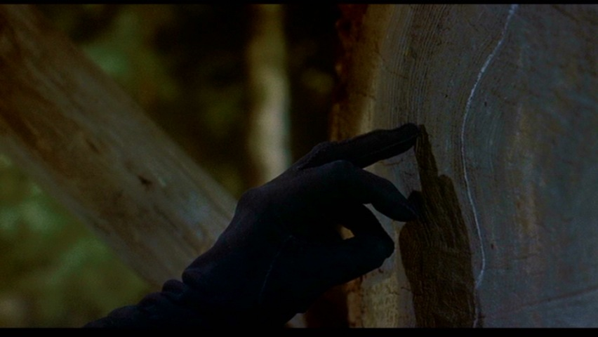 vertigo-Fleur-Sequoia
